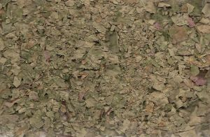 Crushed Leaves Texture 1 by whiteroses-art