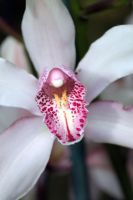 Orchid 3 by CASPER1830