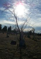 Cemetery Tree by Asphyxia777