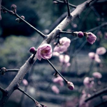 Budding Promise. by caitlin-may