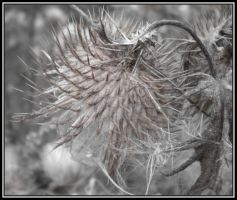 Prickles and fluff II by rockgem