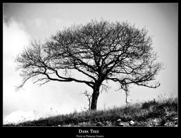 Dark tree 2 by PhotoPask