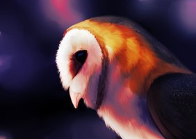 Barn Owl Speedpaint by Chaosthief