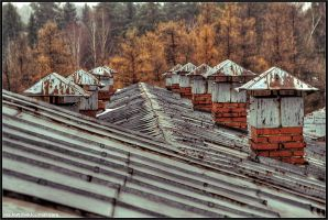 orange autumn. roof by Tommy-Noker