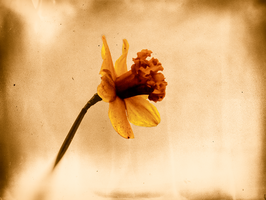 Old yellow by rhb4