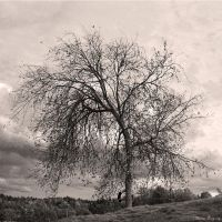 Autumn is here 8 BW by ThereseBorg