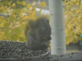 Squirrel Snacking by Sanluris