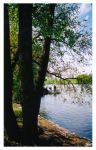 A Tree Next to the River by pintoman