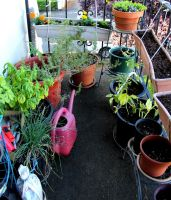 Balcony Garden Picture by lupagreenwolf