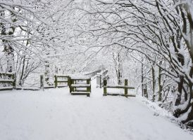Snow Covered Fence by StrandedAutumn