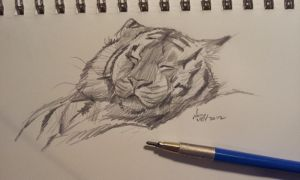 manditory daily cat sketch 499 by nosoart