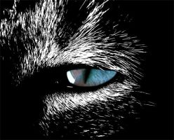 Cat Eye Scratch Board by kitiekat4U