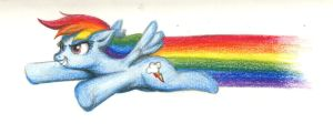 Dashie in pencil crayon by Tommassey250