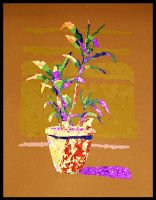 Collage Plant by haiderali