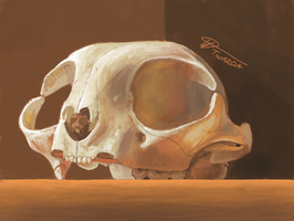 14. Sketchy Skull [3DS] by Twarda8