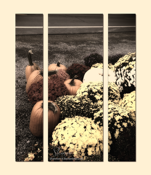 Fall - pumpkins and flowers by Shannon-K