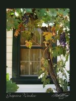 Grapevine Window by DistantVisions