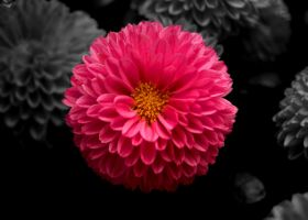 Think Pink by Russwharton