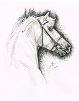 Sweet Silver - traditional drawing by Pencil--Pony