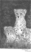 Cheetahs 2 by Carryn