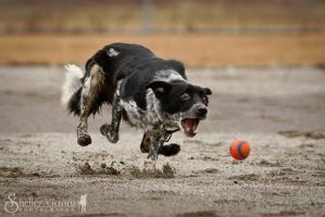 I'm going to GET it!! by ShelleyVPhoto