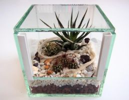Terrarium with exuviae by Isisnofret