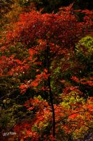 red tree 2 by gameover2009