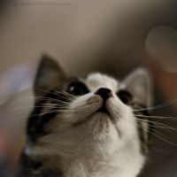 Day 143: Curious Cat by siriandersen