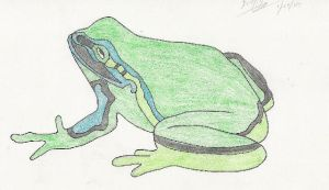Frog by aimfis