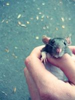 little sweetie rat by BloodyLin