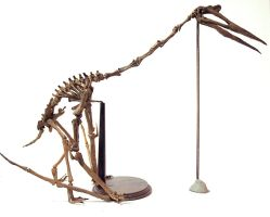 Quetzalcoatlus step 4 by hannay1982