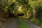 Small Country Lane by AcridMonkry