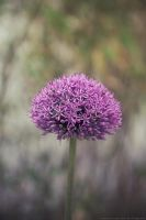purple ball by CliffWFotografie