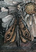 ACEO: Agrotis Segetum by Si3art