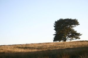 Stock heath landscape october by Nexu4