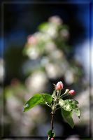 Composition in the apple tree... by Yancis