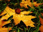 Golden Leaf IV... by Erylum