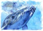 Blue Whale by monyesse