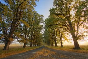 Autumn Road by CainPascoe