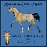 Kometava Horse Import #18 *SOLD* by Zephyrra