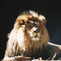 King by carterr