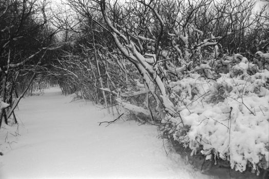 Snowstorm 1997 by glucose2010