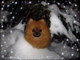 Merry Christmas from Sora the Pomeranian by Sapphiresenthiss