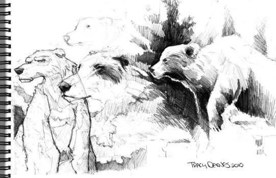 Life Drawing Study: Bear by t-deines
