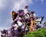 Butterfly by IsisAmanodel