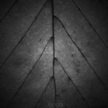 Veins of Life by serel