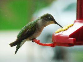 May 1st HummingBird by BrutalityBob