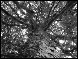 Nervous System of a Tree by realPhixion