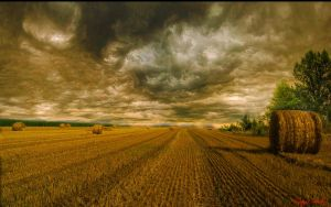 Hungary landscapes.  Summertime. (HDR.) by magyarilaszlo