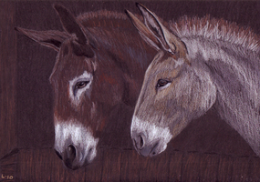 Donkeys by Cerih
